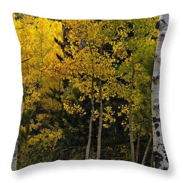 Aspen Light Throw Pillow by Dave Dilli