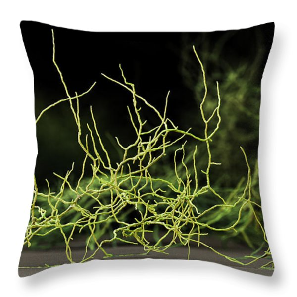 Aspergillus Niger Fungus Sem Throw Pillow by Eye of Science