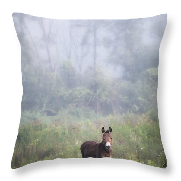 August morning - Donkey in the field. Throw Pillow by Gary Heller