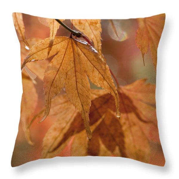 Autumn Acer Throw Pillow by Anne Gilbert