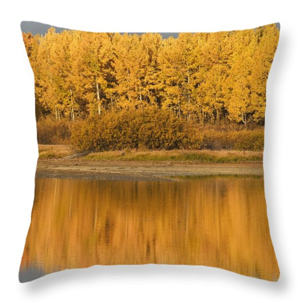 Autumn Aspens Reflected In Snake River Throw Pillow by David Ponton