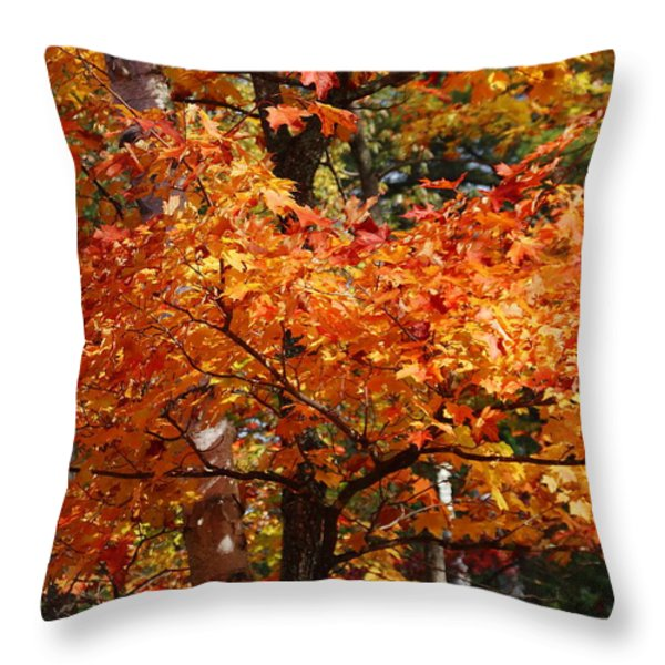 Autumn Gold Throw Pillow by Pat Speirs