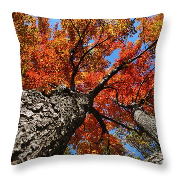 Autumn Nature Maple Trees Throw Pillow by Christina Rollo