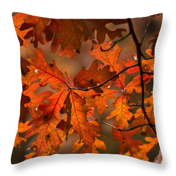Autumn Oak Throw Pillow by Steve Gadomski