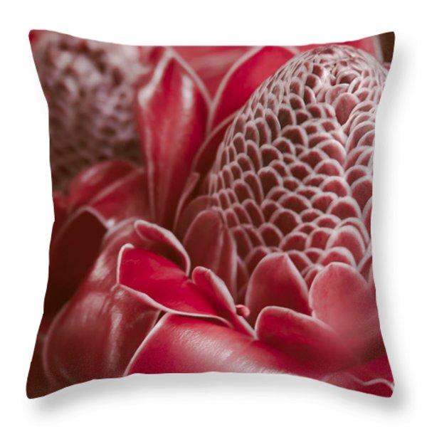 Awapuhi Ko Okoo - Torch Ginger - Etlingera Elatior - Phaeomeria Magnifica Throw Pillow by Sharon Mau