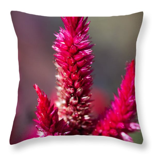B L O S S O M Throw Pillow by Charles Dobbs