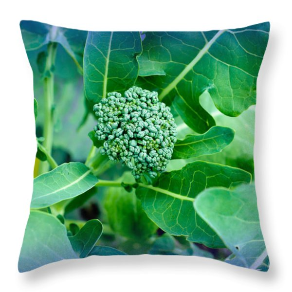Baby Broccoli - Vegetable - Garden Throw Pillow by Andee Design