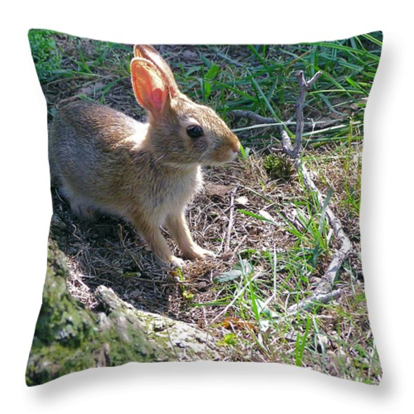 Baby Bunny Throw Pillow by Brian Wallace