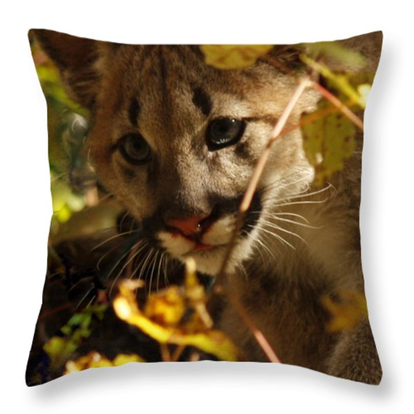 Baby Cougar Watching You Throw Pillow by Inspired Nature Photography By Shelley Myke