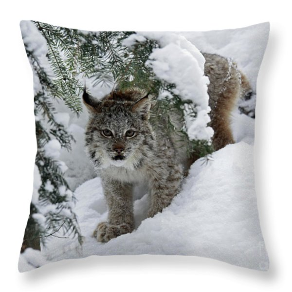 Baby Lynx Hiding in a Snowy Pine Forest Throw Pillow by Inspired Nature Photography By Shelley Myke