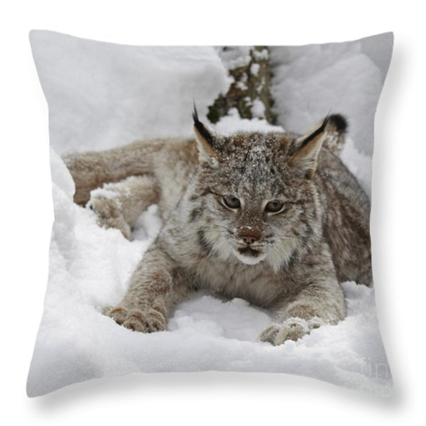 Baby Lynx in a Winter Snow Storm Throw Pillow by Inspired Nature Photography By Shelley Myke