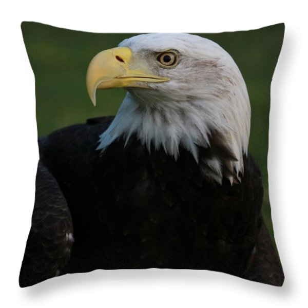 Bald Eagle Details Throw Pillow by Dan Sproul