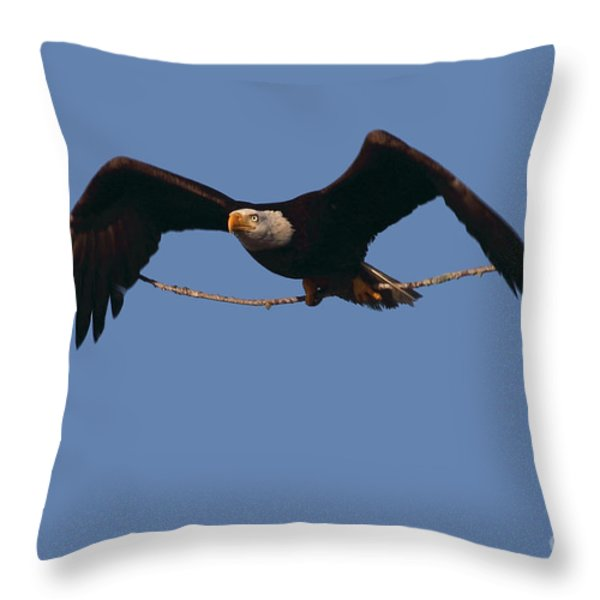 Bald Eagle With Nesting Supplies Throw Pillow by Meg Rousher
