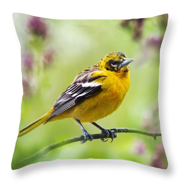 Baltimore Oriole Juvenile Male Throw Pillow by Christina Rollo