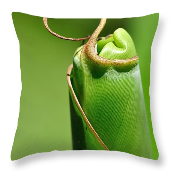 Banana Palm Frond Ready To Unfurl Throw Pillow by Kaye Menner