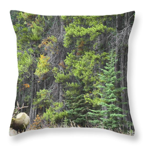 Banff Spring Elk Throw Pillow by Andrea Hazel Ihlefeld