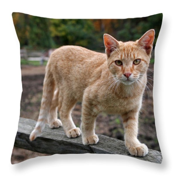 Barn Cat Throw Pillow by Rona Black