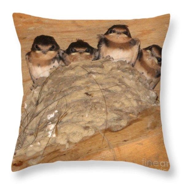 Barn Swallow Chicks 2 Throw Pillow by Conni Schaftenaar Elderberry Blossom Art