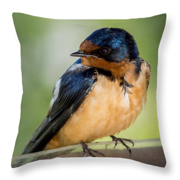 Barn Swallow Throw Pillow by Ernie Echols