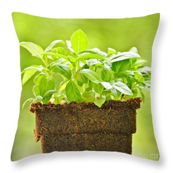 Basil Throw Pillow by Elena Elisseeva