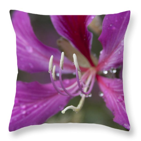 Bauhinia blakeana - Hong Kong Orchid - Hawaiian Orchid Tree Throw Pillow by Sharon Mau