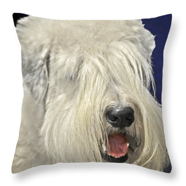 Bearded Collie - The 'bouncing Beardie' Throw Pillow by Christine Till