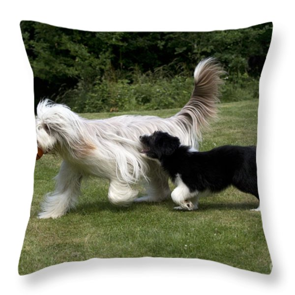 Bearded Collies Playing Throw Pillow by John Daniels