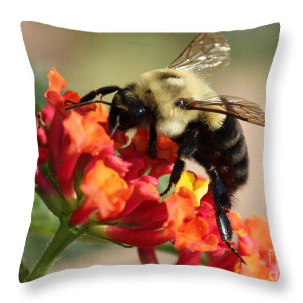 Beautiful Bee Throw Pillow by Carol Groenen