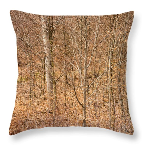 Beautiful fine structure of trees brown and orange Throw Pillow by Matthias Hauser