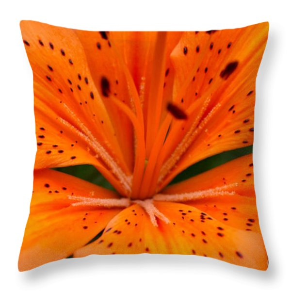 Beautiful Lily Throw Pillow by Carol Lynch