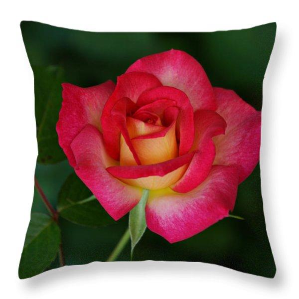 Beautiful Rose Throw Pillow by Sandy Keeton