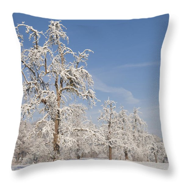 Beautiful winter day with snow covered trees and blue sky Throw Pillow by Matthias Hauser