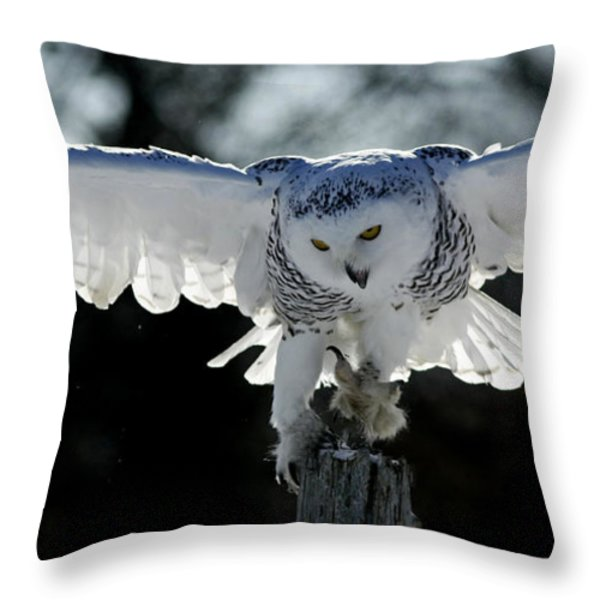 Beauty in Motion- Snowy Owl Landing Throw Pillow by Inspired Nature Photography By Shelley Myke