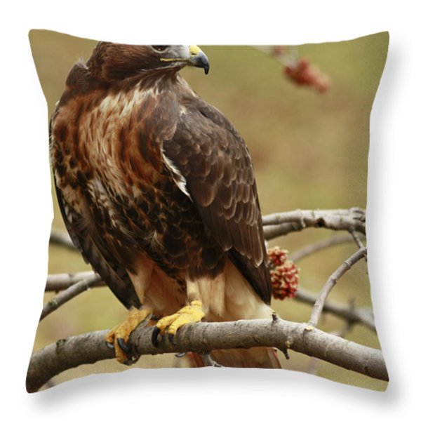 Beauty in Nature Red Tailed Hawk in the Spring  Throw Pillow by Inspired Nature Photography By Shelley Myke