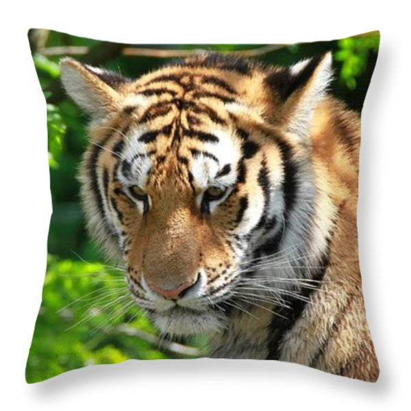 Bengal Tiger Portrait Throw Pillow by Dan Sproul