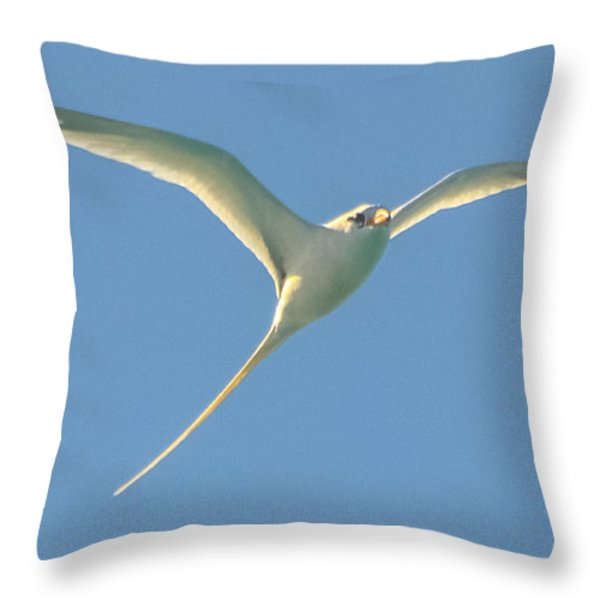 Bermuda Longtail In Flight Throw Pillow by Jeff at JSJ Photography