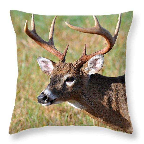 Big Buck Throw Pillow by Todd Hostetter