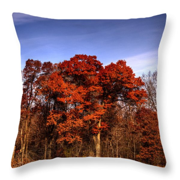 Big Red Throw Pillow by Thomas Young