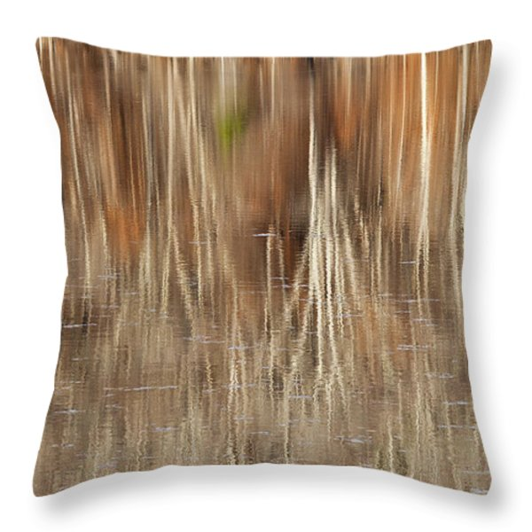 Birch Tree Reflections Throw Pillow by Alan L Graham