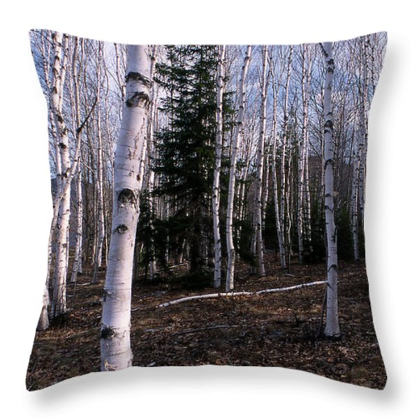 Birches Throw Pillow by Skip Willits