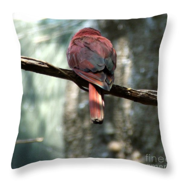 Bird Throw Pillow by Andrea Anderegg