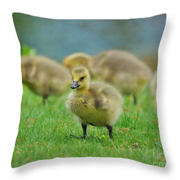Bird - Baby Goose -leader Of The Pack Throw Pillow by Paul Ward
