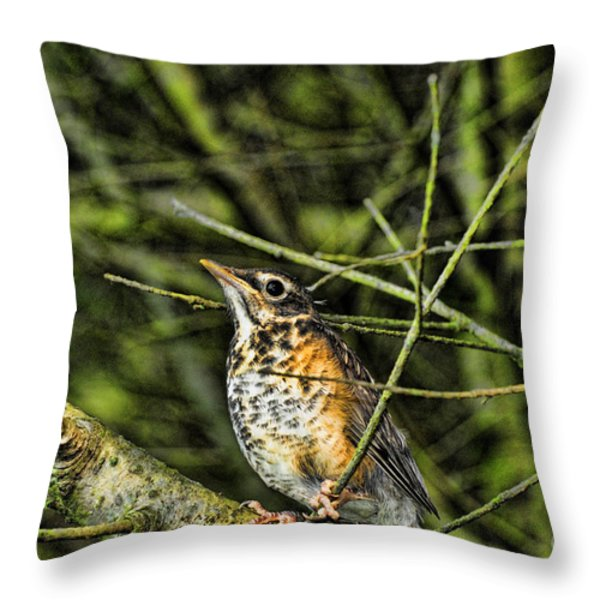 Bird - Baby Robin Throw Pillow by Paul Ward