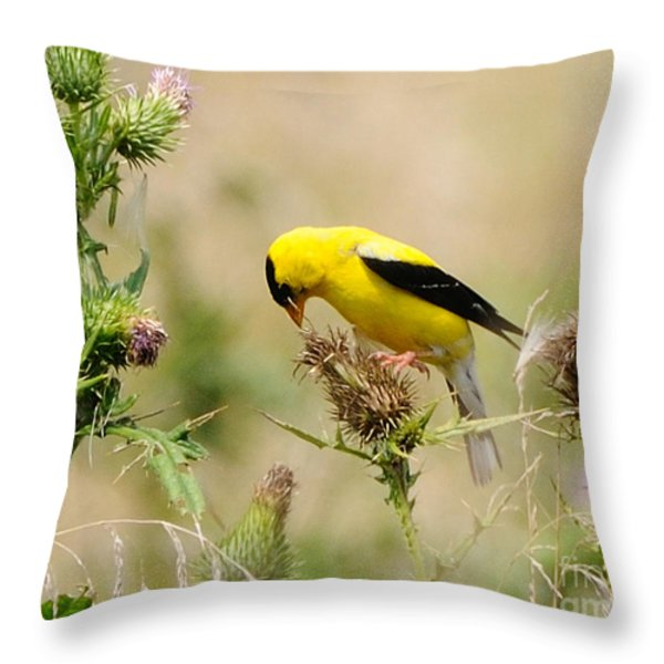 Bird -gold Finch Feasting  Throw Pillow by Paul Ward
