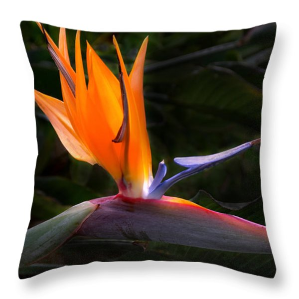 Bird Of Paradise Flower Throw Pillow by Brian Harig