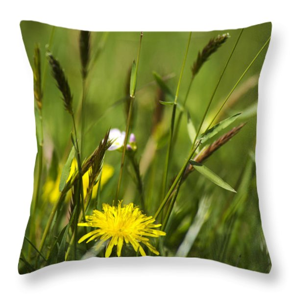 Bird's Eye View Throw Pillow by Christina Rollo
