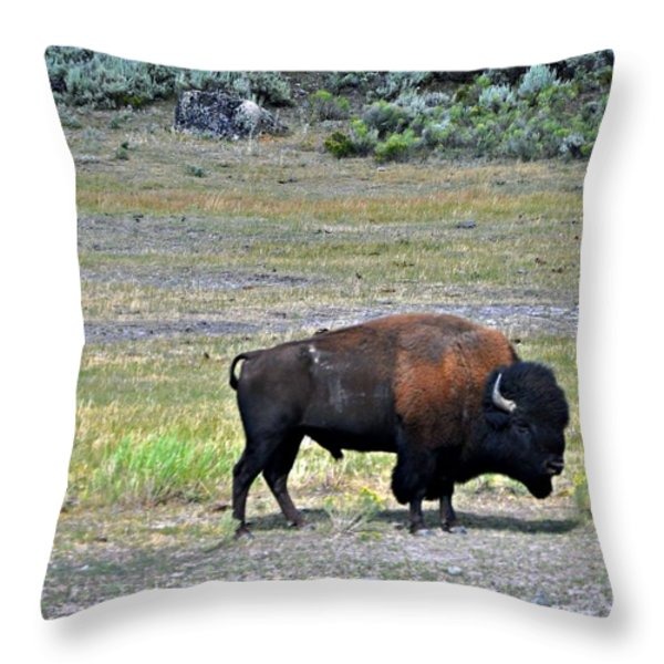 Bison In Lamar Valley Throw Pillow by Marty Koch