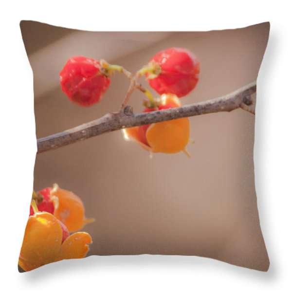 Bittersweet Dream Throw Pillow by Teresa Mucha