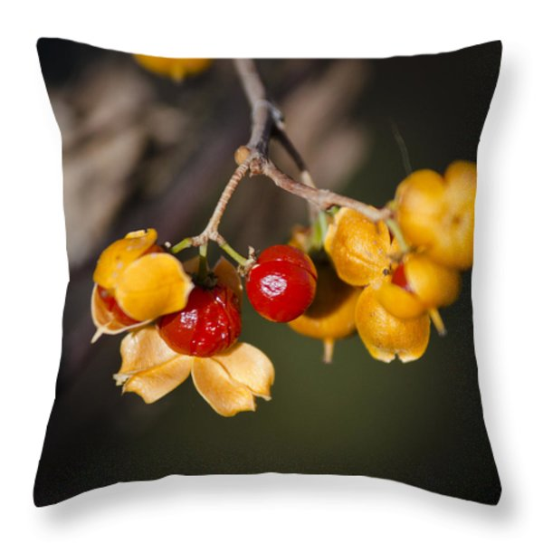 Bittersweet Squared Throw Pillow by Teresa Mucha
