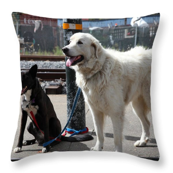 Black and White Dogs 5D25875 Throw Pillow by Wingsdomain Art and Photography